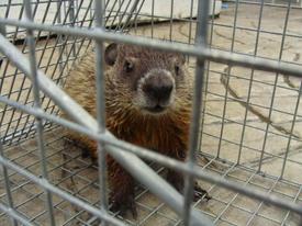 Hedgehog02