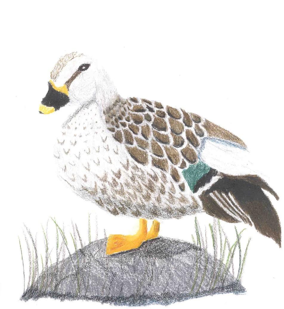erins_duck